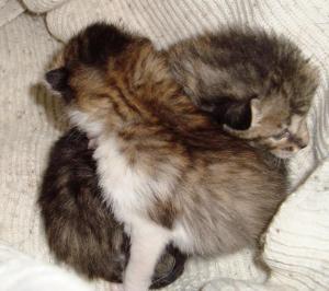 chatons (8)